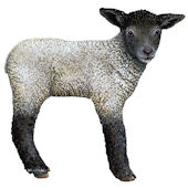 Lamb Peel and Stick Decal