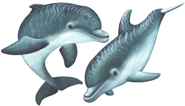 Playful Baby Dolphins Peel and Stick Decals - Wall Sticker Outlet