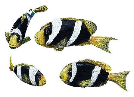 Yellowtail Clownfish Peel and Stick Decals - Wall Sticker Outlet